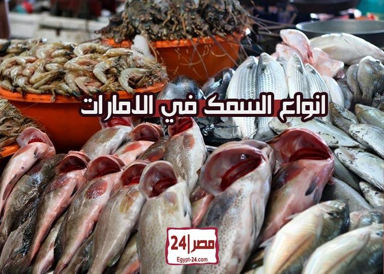 انواع السمك في الامارات بالصور